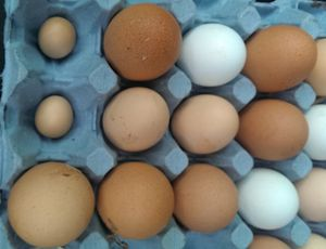 A selection of eggs from my hens with two tiny ones.