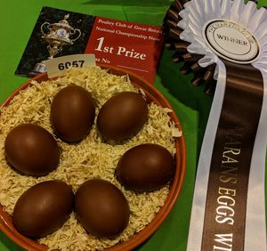 The winning display of marans eggs from the national poultry show