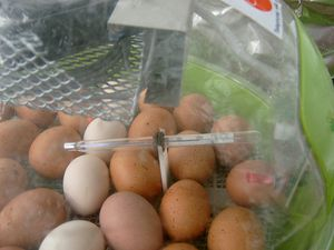 One of my incubators showing eggs in a cradle