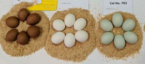 A selection of chickens eggs