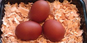 Nearly all the eggs consumed are unfertilised